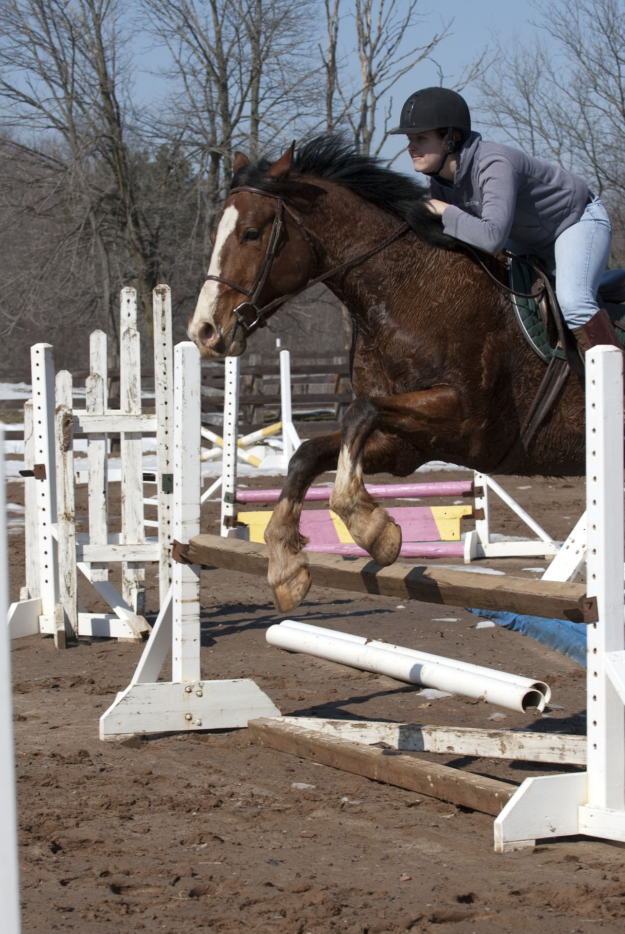 10338 Horses 050408